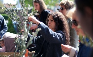 Ove nedjelje Caritasova tradicionalna humanitarna akcija Maslinova grančica nade
